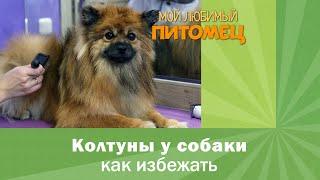 гигиенический уход за собакой, основные правила и советы
