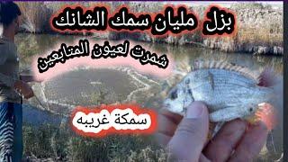 صيد السمك  بزل مليان سمك  شمرنا لعيونكم شوفو منو صاحب الحظ الاكبر