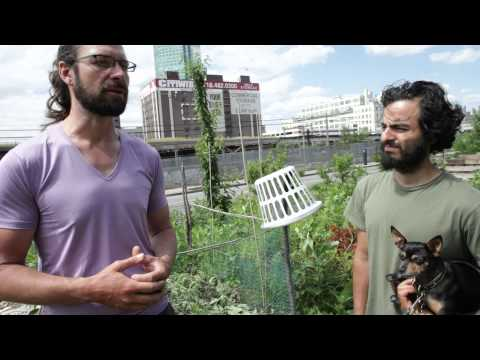 A tour of Smiling Hogshead Urban Farm in Queens New York