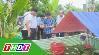 Triển vọng mô hình nuôi ốc bươu đen tr๐ng vèo ở Lai Vung   THDT
