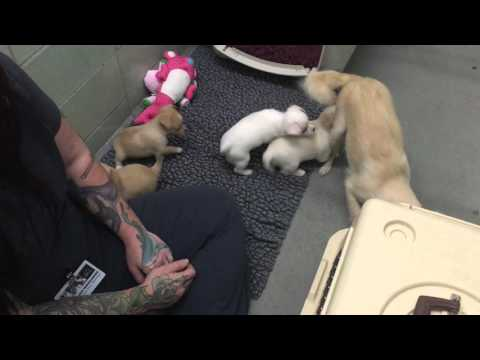 Reunion of Momma and Puppies at the Marin Humane Society