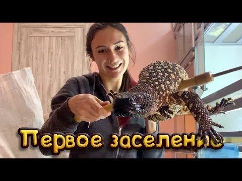 ПЕРВОЕ ЗАСЕЛЕНИЕ / Удавы и ядозубы