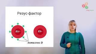 Физиология человека и животных. Группы крови (А. Зыбина)