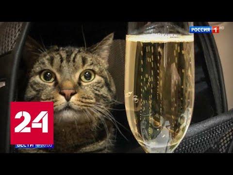 Кот толстый, хозяин хитрый, перевозчик строгий: как найти компромисс - Россия 24