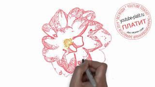 Как нарисовать цветок гвоздику