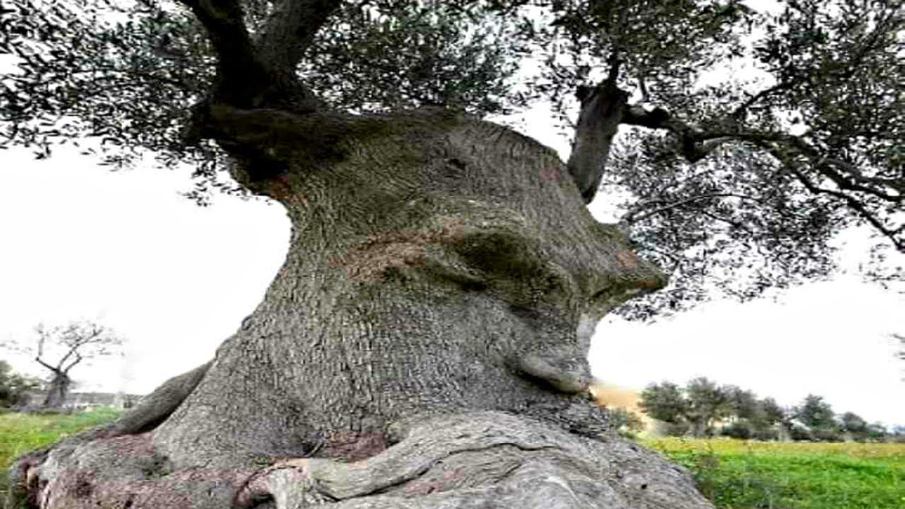 20 bizarre trees with faces youtube