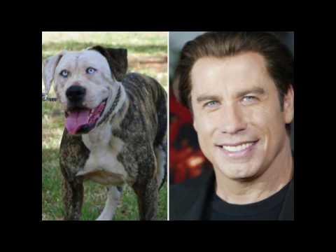 Pets That Should Belong To These Celebrities. MUST SEE !!