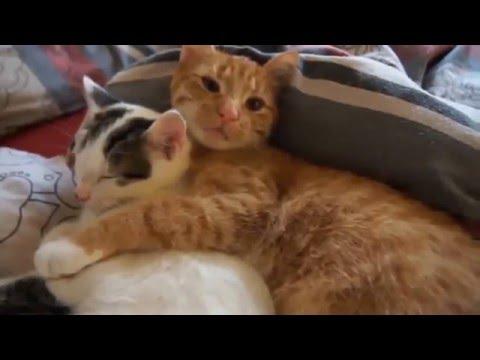 спокойной ночи картинки прикольные с котами