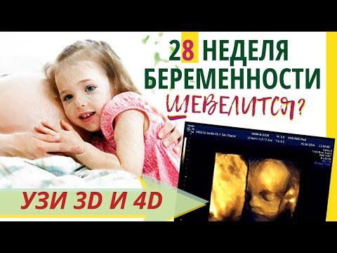 28 неделя беременности. Развитие плода. УЗИ 3D и 4D. Что чувствует беременная. Как выглядит ребенок