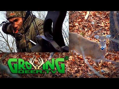 Deer Hunting: Down Wind Deer In Range And Down! (#370) @GrowingDeer.tv