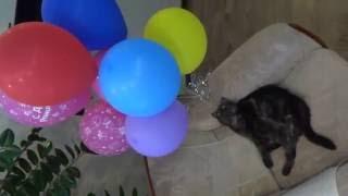 С днем рождения!!! Наша кошка Хася Happy birthday