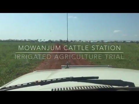 Mowanjum Cattle Station - Irrigated Agriculture Trial