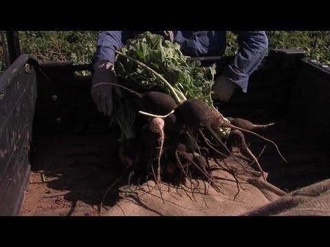 Organic food investigation