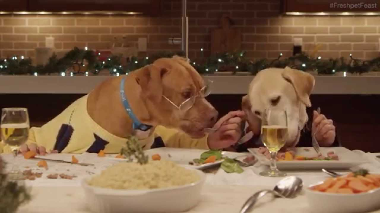 Dogs Dressed Up As Humans At The Dinner Table