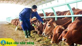 Mô hình nuôi bò thịt đem lại hiệu quả kİnh tế cao tại Đông Nam Bộ