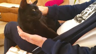Cute Cat Just Wants To Cuddle