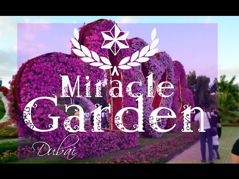 INSIDE DUBAI MIRACLE GARDEN 2016