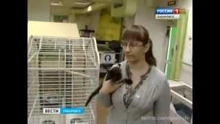 "Вести-Хабаровск. ""Васька"" спасает котят"