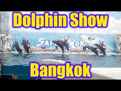 Bangkok Dolphin Show at Marine Park in Safari World