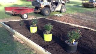 Making A Raised-garden Rose Bed