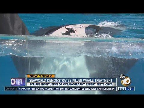 Heart study seeks to understand whale health