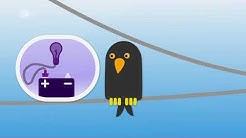Vögel auf Stromleitungen - logo! erklärt - ZDFtivi