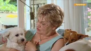 Собачий рай  Почему в Нидерландах нет бездомных собак