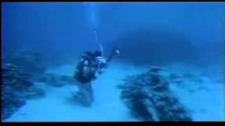 Scuba Diving (Sport), Underwater, sea horses, nurse shark, Sea Turt...