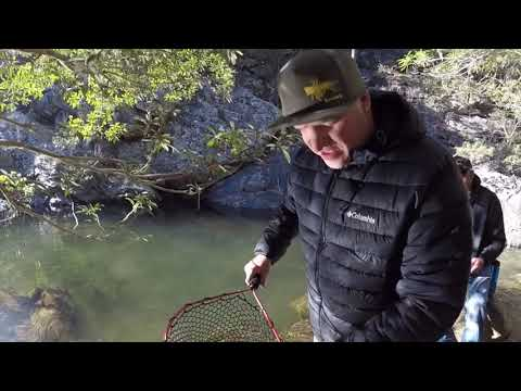 Coxs River Trout Fishing Adventure BLUE MOUNTAINS NSW Lure And Fly