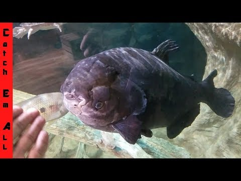 UGLY ANCIENT FISH Is 45 YEARS OLD!!