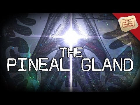 The Pineal Gland: Mysticism and Neuroscience