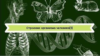 Биология 8 класс $4 Строение организма человека-1