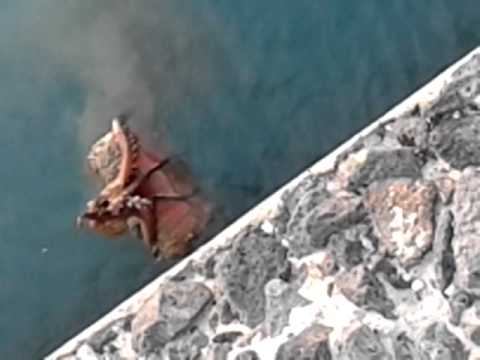 polipo al porto di catania