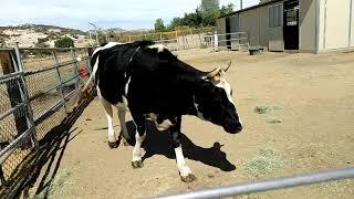 Farm Animal Refuge, Campo, CA October 2018