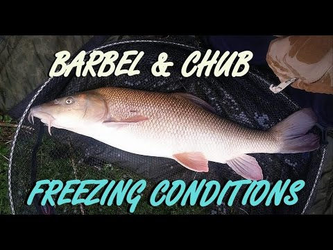 Barbel Fishing In Freezing Conditions