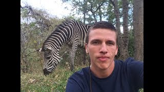 Африка, бесплатное сафари. Ботсвана, парк Чобе. Слоны на дороге.