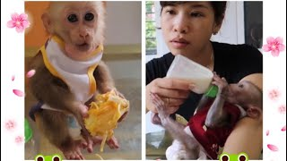 Monkey GON - have lunch with mother and sister.