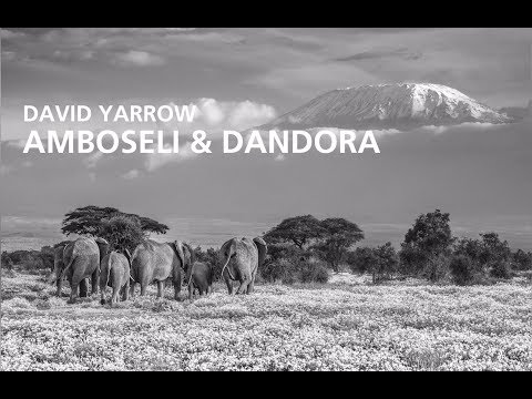 Nikon Ambassador David Yarrow's Special Project: 'Amboseli & Dandora'