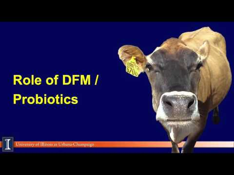 An update on feed additives: Probiotics, yeast and niacin