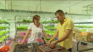 Бизнес на микрозелени: технология выращивания и польза