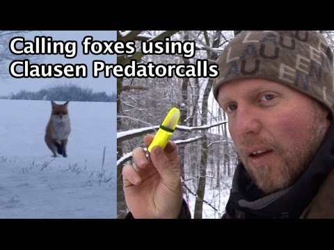 Clausen Predatorcalls  The ultimate foxcall!