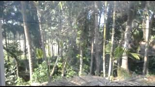 prasad kotian baddur videos