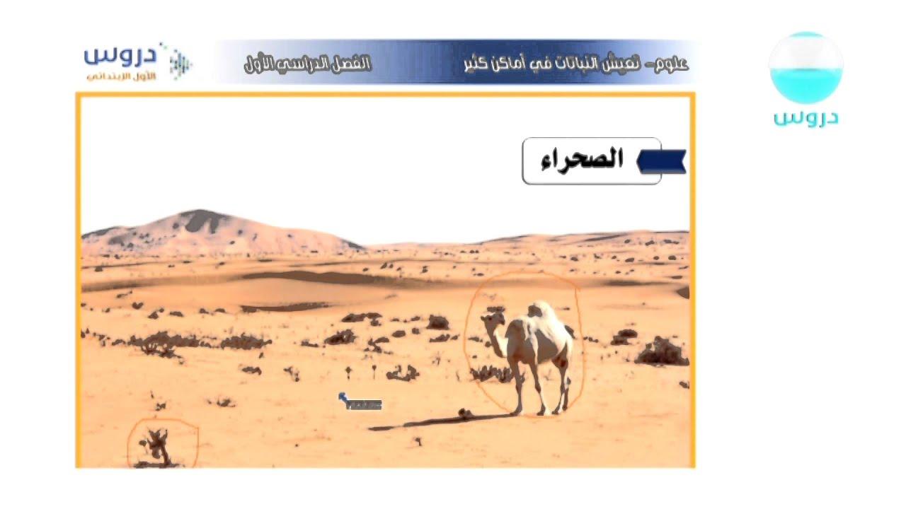 كتاب ابطال من الصحراء