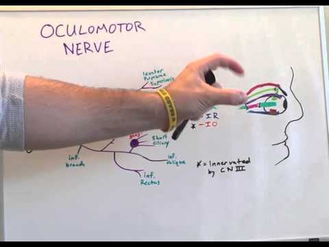 Cranial Nerve III - Anatomy Lecture for Medical Students - USMLE Step 1