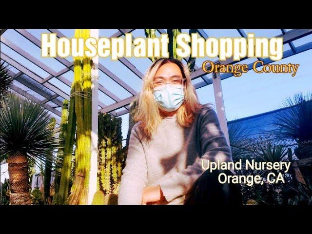 Best Houseplant Nursery In Orange
