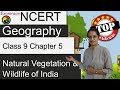 NCERT Class 9 Geography Chapter 5: Natural Vegetation & Wildlife of India - Examrace