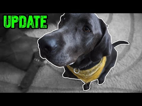 Charcoal Lab UPDATE (Dog Trick Update)