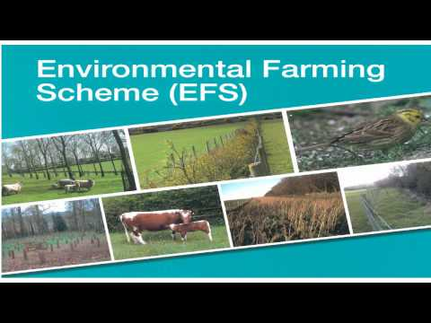 Environmental Farming Scheme (EFS) - Wider Level