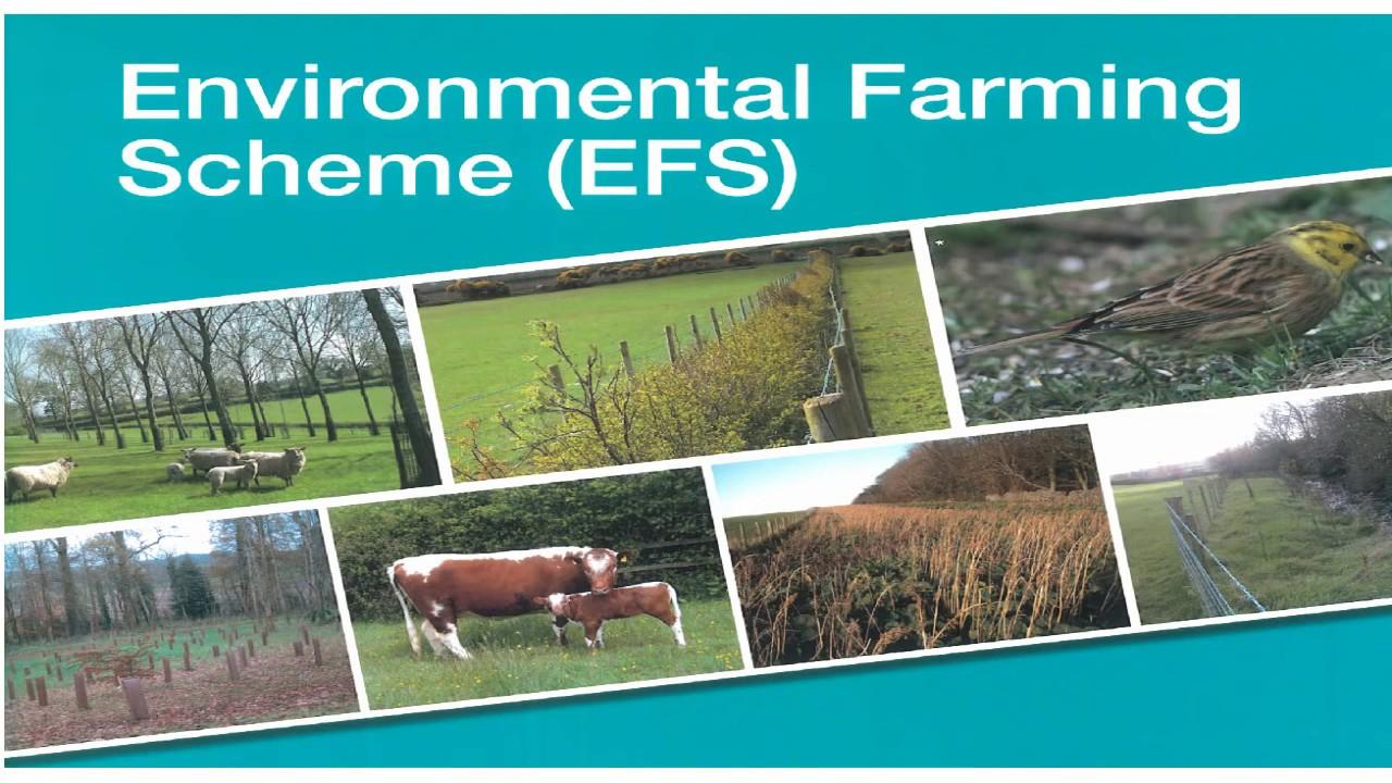 Environmental Farming Scheme (EFS) - Wider Level