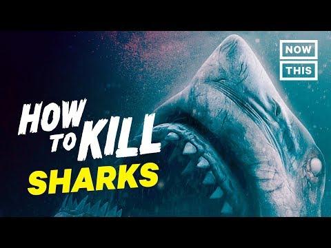 How to Kill Sharks | Slash Course | NowThis Nerd